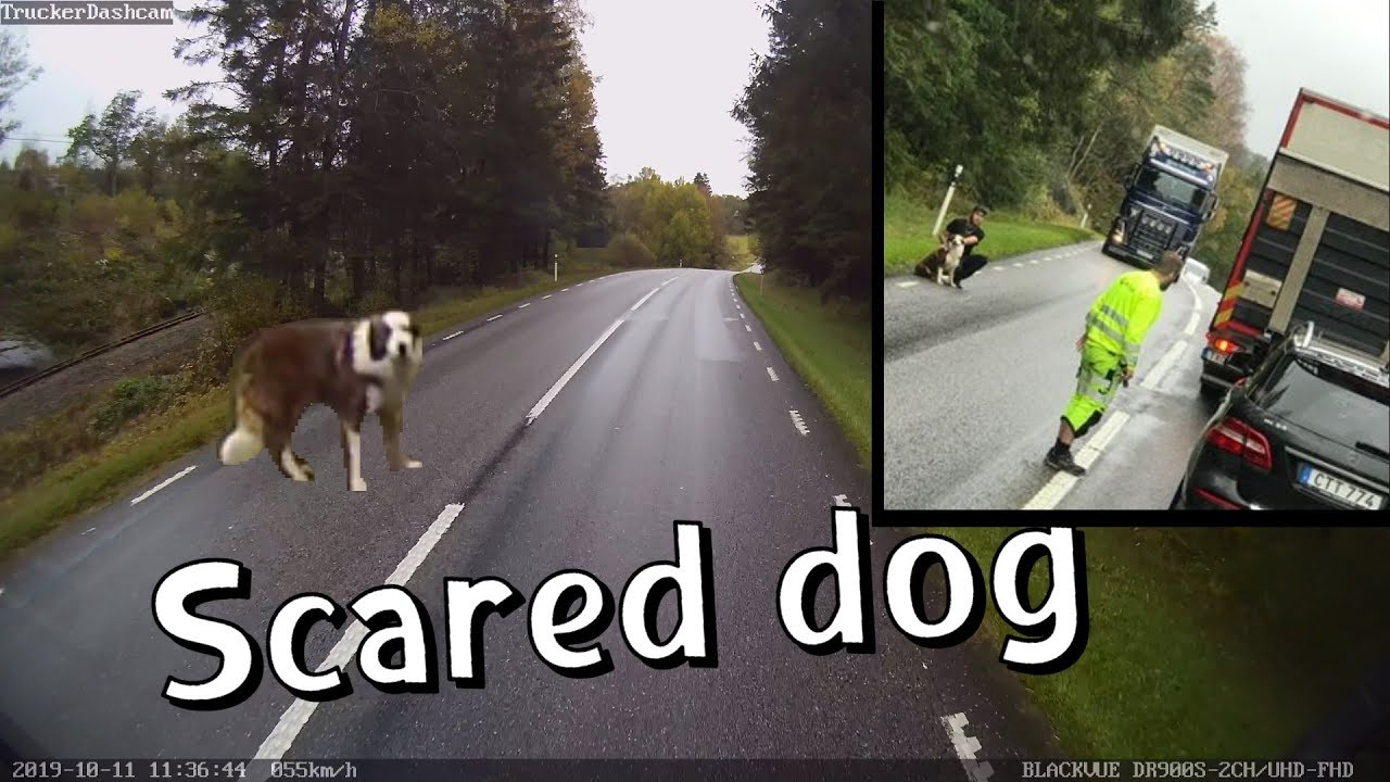 Lost Dog Rescued By Swedish Truck Drivers #CaughtOnBlackVue
